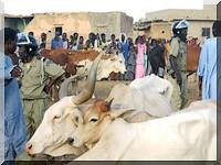 Bababé: La police réprime des paysans à Dioudé Dièri.