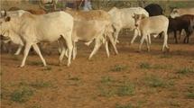 Enquette sur le detournement de l'argent du SiDA : Le Parquet d'Aleg ordonne l'inventaire des biens de Dia Amadou à Sarandougou