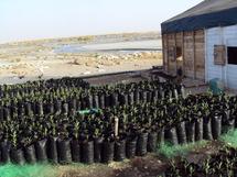 De l'eau de mer pour reboiser Nouakchott : Est-ce possible ?