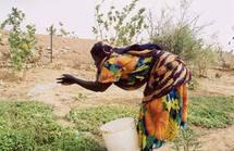 La Mauritanie se dote d'un Fonds d'intervention pour l'environnement
