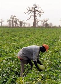 Afrique: les bailleurs de fonds invités à investir dans l'agriculture -  NOUAKCHOTT