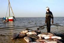 Bataille internationale autour du poisson mauritanien