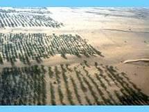 Projet de muraille verte en Afrique: La Mauritanie laissée en rade.