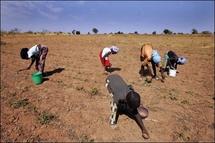 L'argent des immigrés se fait rare dans les campagnes du Sénégal