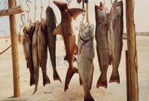 Une société sud-africaine va implanter une usine de poissons à Nouakchott