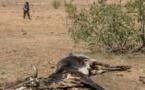 Mauritanie: vive inquiétude au sujet du déficit pluviométrique